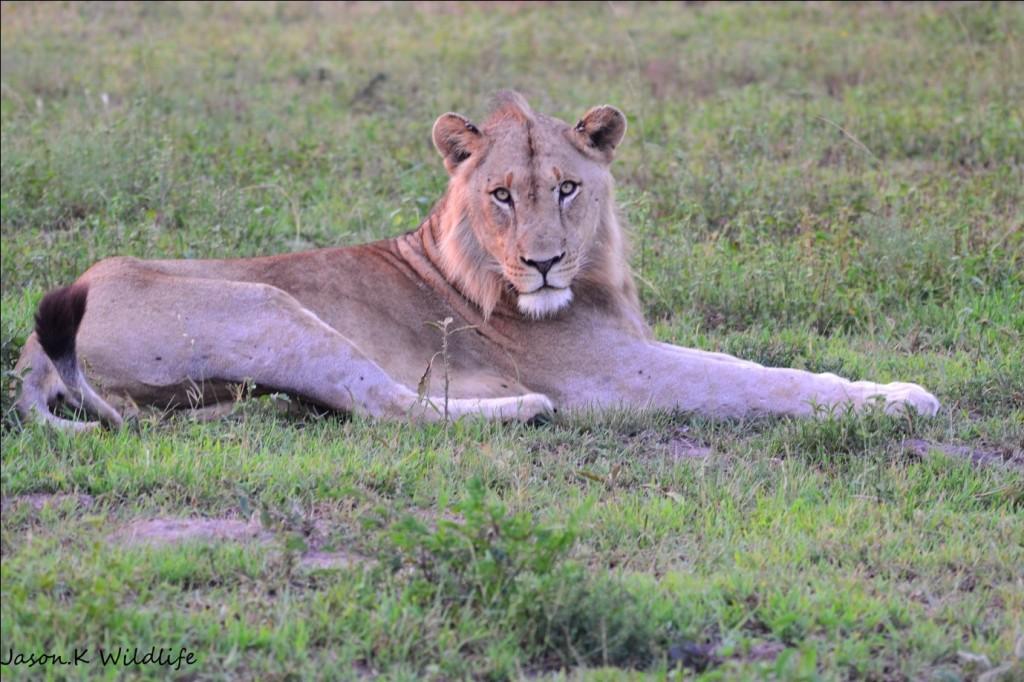 Photograph by Jason Kipling, Ranger, Rhino Ridge Safari Lodge