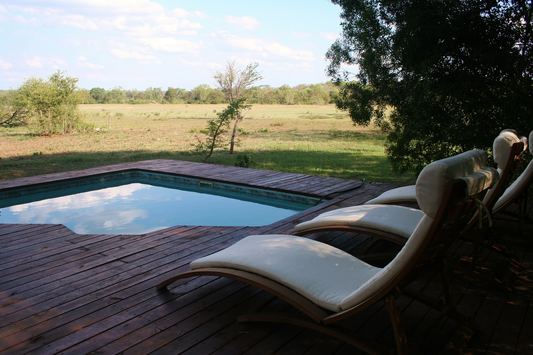 Pool with a view of zebra roaming free and wild on the Timbitene Plains of Kruger National Park