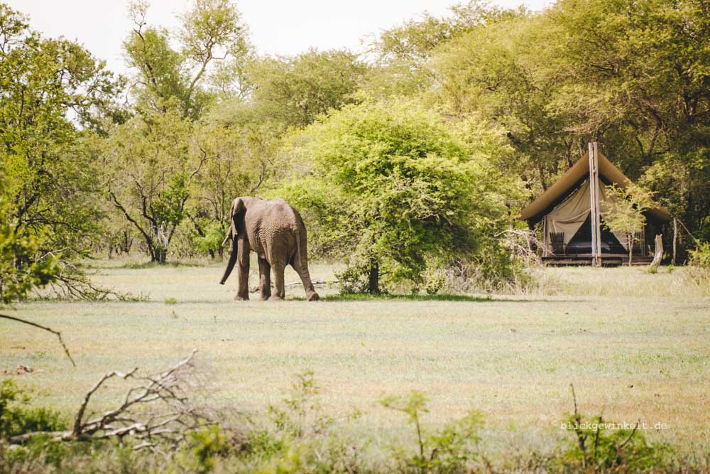 Wouldn't an elephant just walk over us? The incredible days at Rhino Post Safari Lodge's Plains Tented Camp by Inka Cee