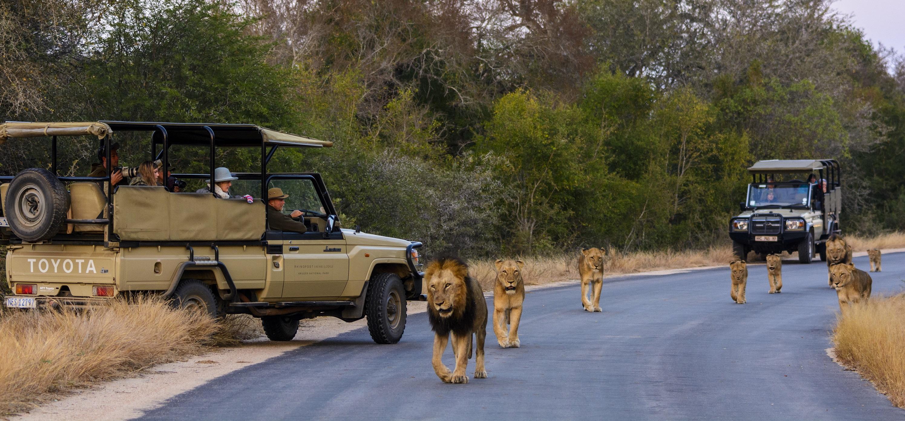 Resultado de imagem para Kruger National Park