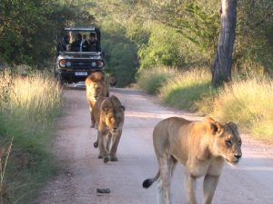 Game drive from Plains Tented Camp. Photo by Roger de la Harpe.