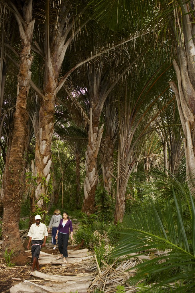 A guided walk through the Raffia Forest