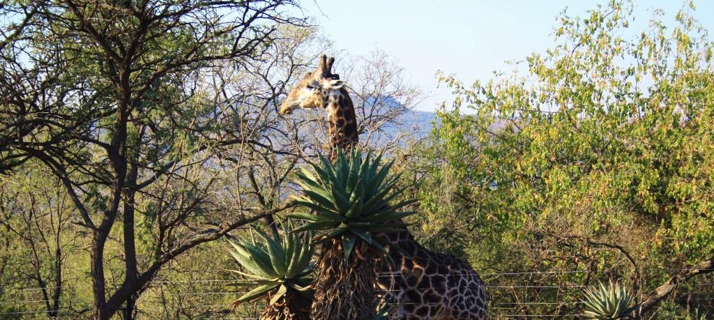 south Africa safari lodges