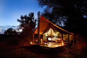Follow the golden light at Plains Tented Camp in the Kruger National Park
