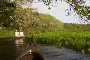 Do take an early morning canoe outing from Kosi Forest Lodge