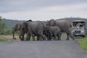 Beautiful Elephant Sightings