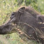 Beautiful-ugly beasties of the bush