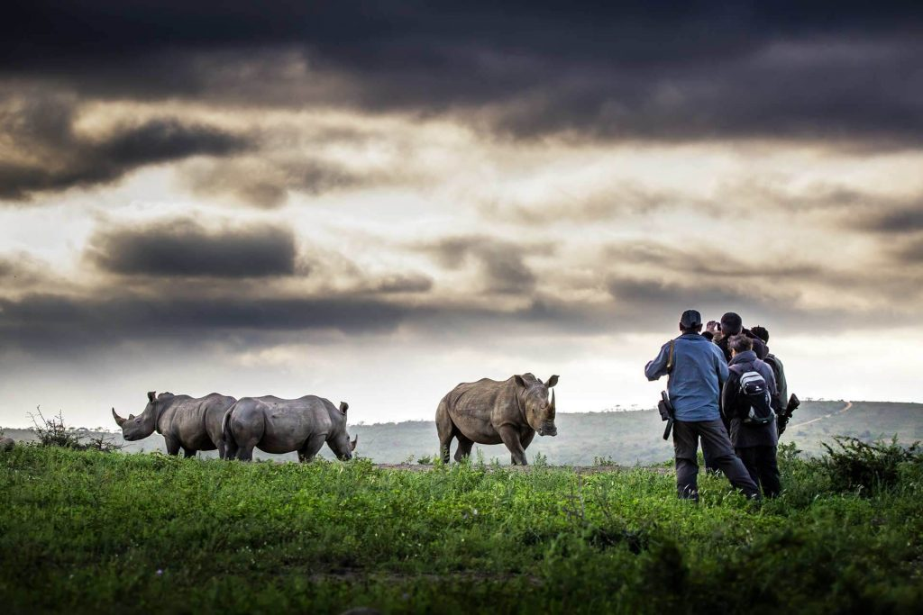 Rhinos in Hluhluwe at Rhino Ridge Safari Lodge, Isibindi Southern Africa Safari Lodge Holiday Specials and Packages