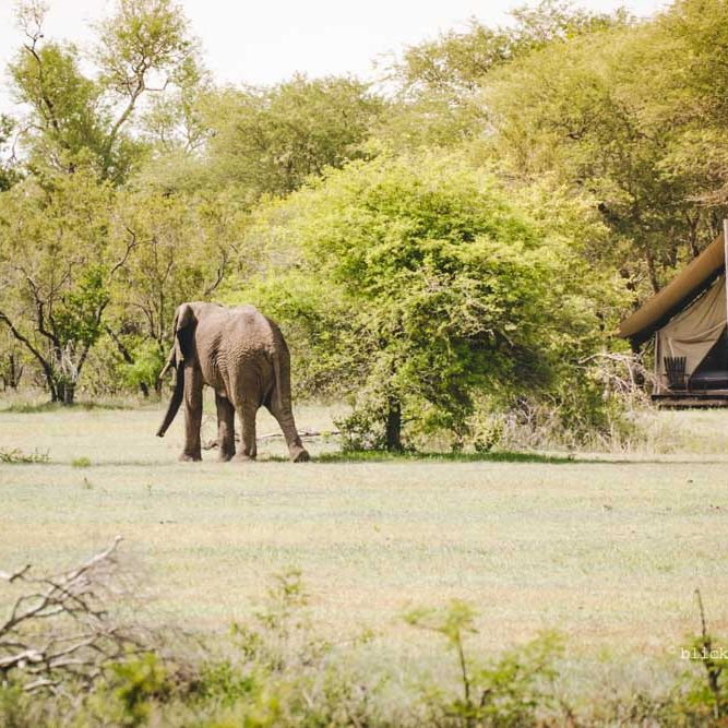 game lodges in South Africa