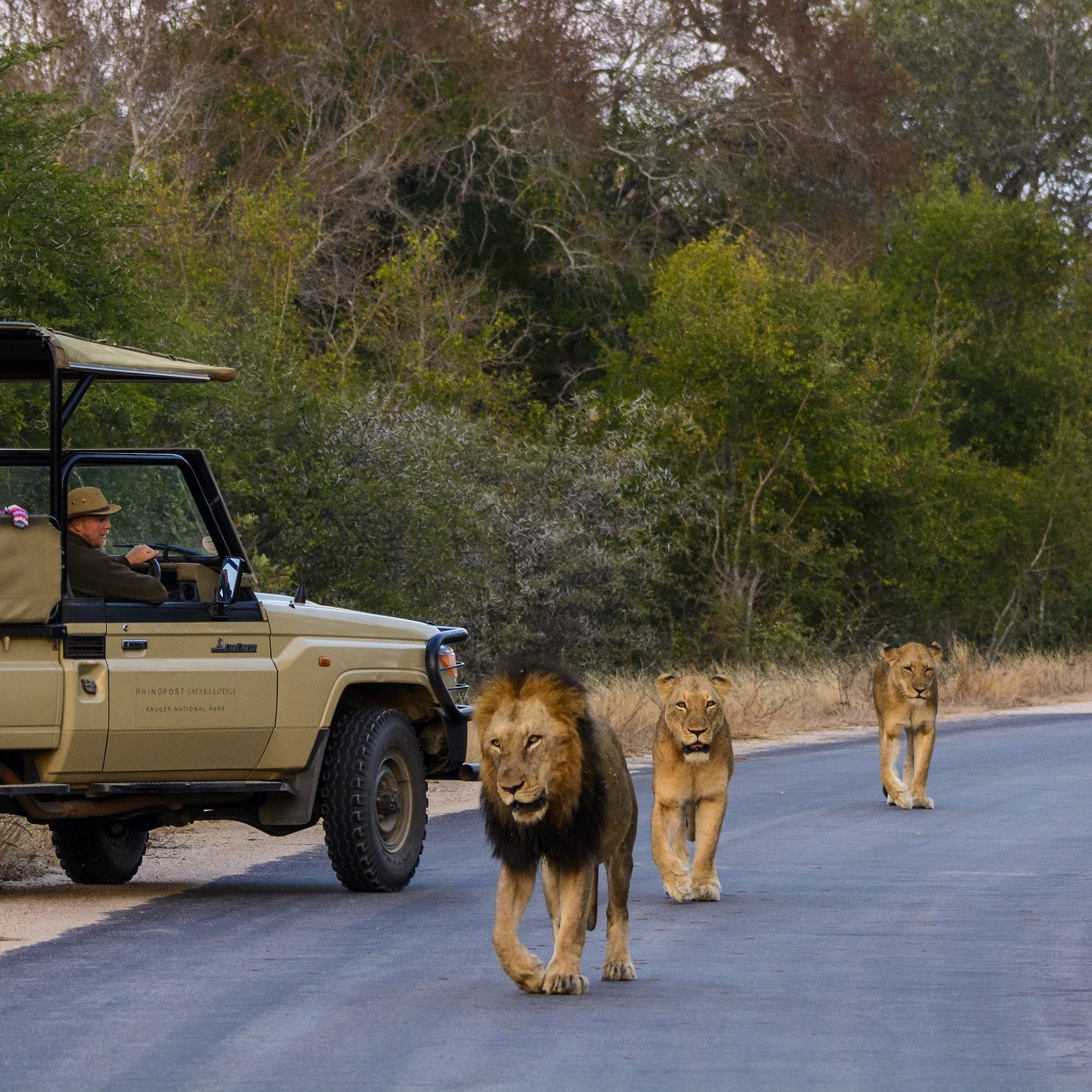 Kruger National Park. Mpumalanga. South Africa