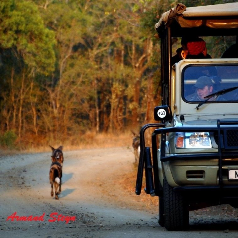 Wild Dog and Truck Hluhluwe Armand 2