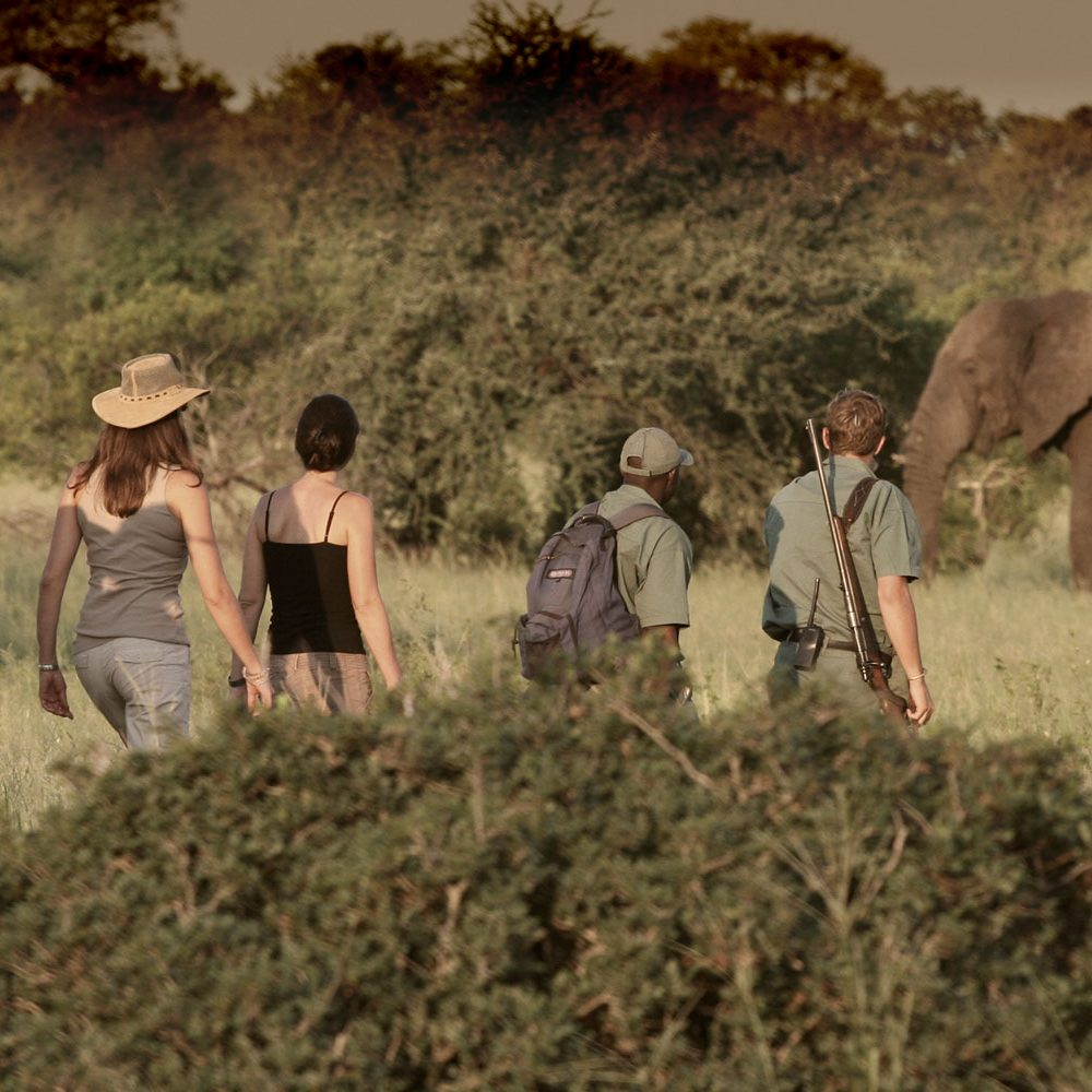 rhinowalkingsafaris